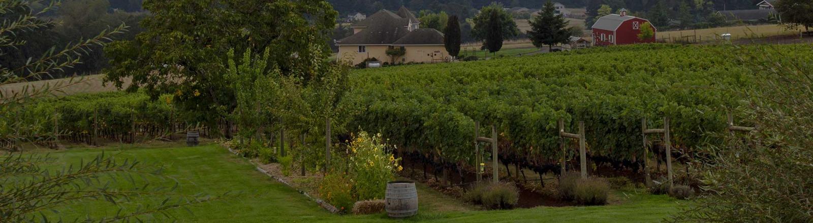 Rain from clouds over Wilsonville's Terra Vina Wines vineyard provide nourishment to the grape vines during grape growing season in oregon's mt hood territory