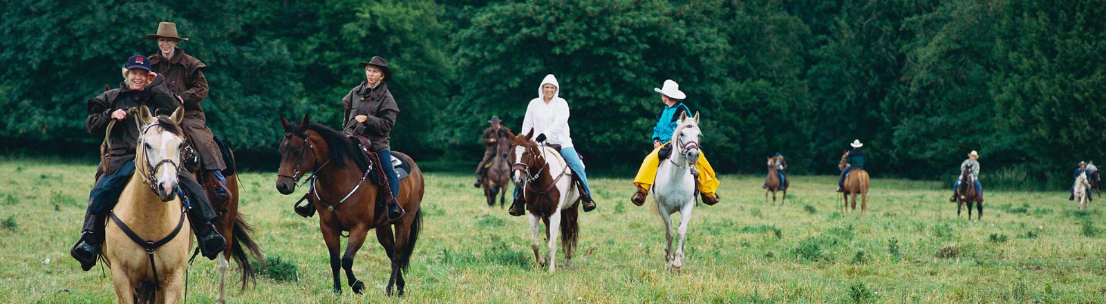 A buckskin leads the way for 10 horseback riders as they ride through a meadow while exploring the Molalla River Corridor.