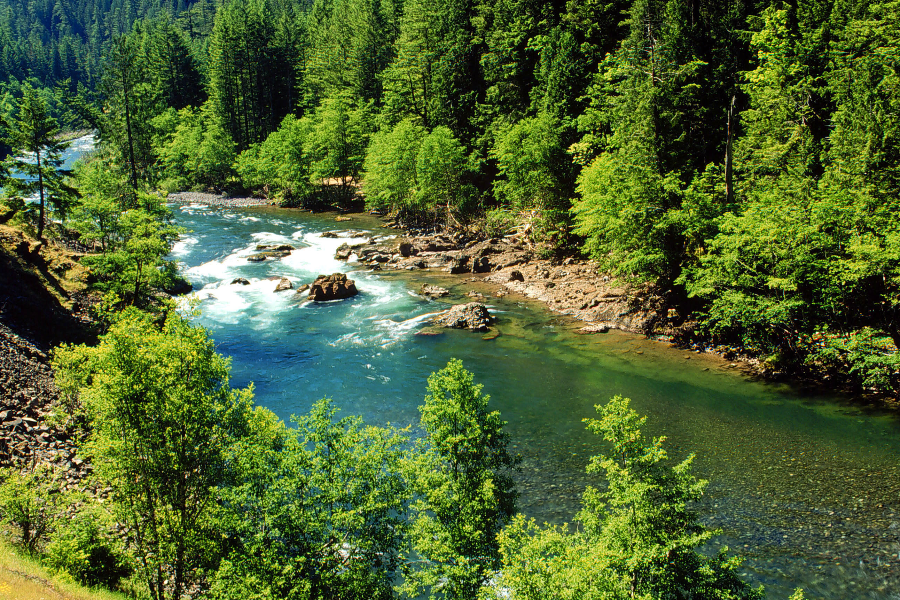 View from above Wild & Scenic Clackamas River with pristine blue water, a whitewater rapid, and vibrant green forest trees