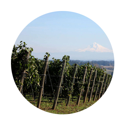 Wooden posts at ends of rows of grape vines at Pete's Mountain Vineyard with snow-covered Mt. Hood in distance across valley
