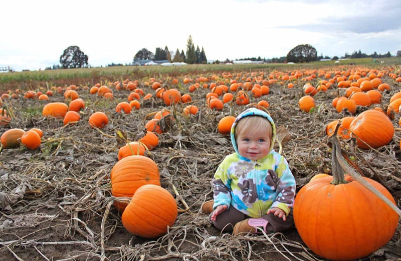 Cherub faced toddler sitting in a pumpkin patch surrounded by hundreds of orange pumpkins as far as the eye can see